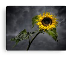 Sunshine after the rain Canvas Print