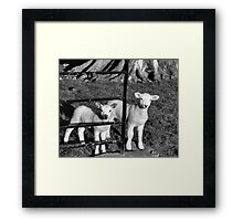 Hiding From Bo-Peep Framed Print