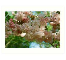 Cherry Blossoms in Brooklyn Art Print