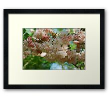 Cherry Blossoms in Brooklyn Framed Print