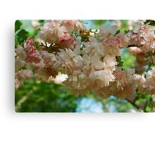 Cherry Blossoms in Brooklyn Canvas Print