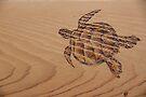 Pyrography: Swimming Turtle by aussiebushstick