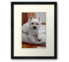 Maevey the Westie Framed Print
