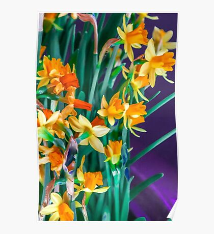 ABSTRACT DAFFODILS IN ORANGE Poster