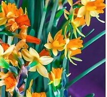 ABSTRACT DAFFODILS IN ORANGE by pjm286
