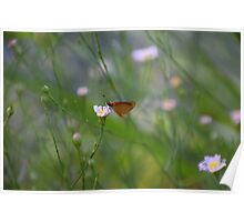 Soft Lighting Butterfly No. 2 Poster