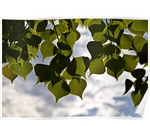 Leafy Sky No. 2 Poster
