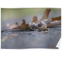 Acorn and leaf still life  Poster