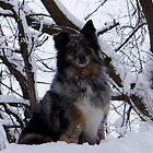 Snow Dog by Breanna Kane