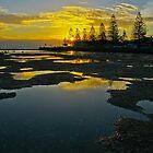 A Pond Reflection. by wayne51