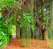 Weeping Willow by Margaret Stevens