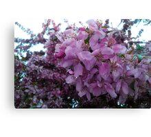 Blossoms.  Canvas Print