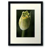Warm Feeling Framed Print