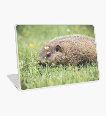Baby Groundhog in the grass and buttercup field Laptop Skin