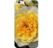Love Of The Rose iPhone Case/Skin