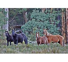 Brumby Mares with foals Photographic Print