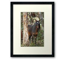 Black Brumby Stallion Framed Print