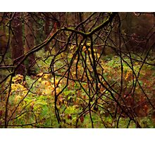The Mystery of Stockhill Forest Photographic Print