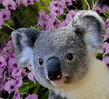 Koala and Orchids by Erika Kaisersot