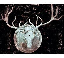 Deer Bust Photographic Print