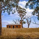 Lost in the Clare Valley by Jan Pudney