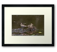 Snipe Duo Framed Print