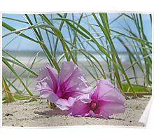 Flowers on a beach Poster