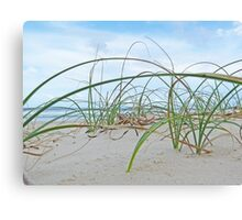 Lennox Head grassy hill with ocean backdrop Canvas Print