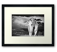 Silver horse, silver clouds  Framed Print
