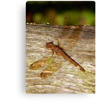 Dragonfly Basking In The Sun Canvas Print