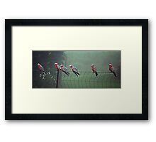 Galah's on a Fence Framed Print