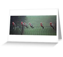 Galah's on a Fence Greeting Card