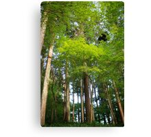 Trees in Korankei valley Canvas Print