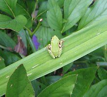 Green Friend by JIRogers