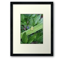 Green Friend Framed Print