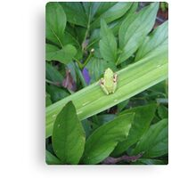 Green Friend Canvas Print