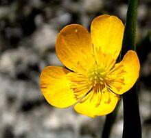 flower by mattball