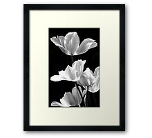 Spring In Black And White Framed Print