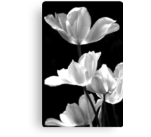 Spring In Black And White Canvas Print