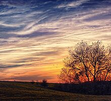 Sunset on A Painted Sky by Vicki Field