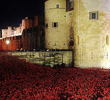 Poppies at the Tower of London - Night #3 by InterestingImag