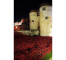 Poppies at the Tower of London - Night #3 Photographic Print