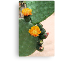Prickly Pear Orange Bloom Canvas Print