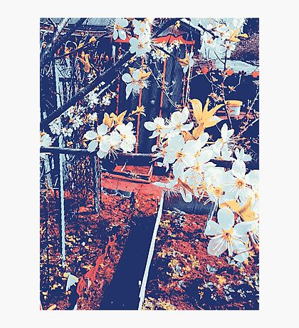 Halftone Blossoms Photographic Print