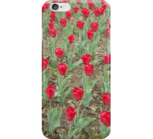 Lots of Red Tulips iPhone Case/Skin