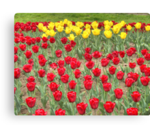 Lots of Red Tulips 2 Canvas Print