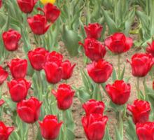 Lots of Red Tulips 2 Sticker