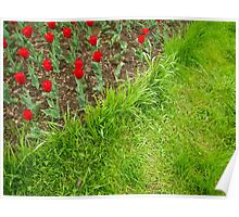 Red Tulips and Green Grass Poster