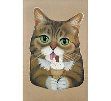 Lil Bub Photographic Print