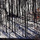 The woods in Winter by cclaude